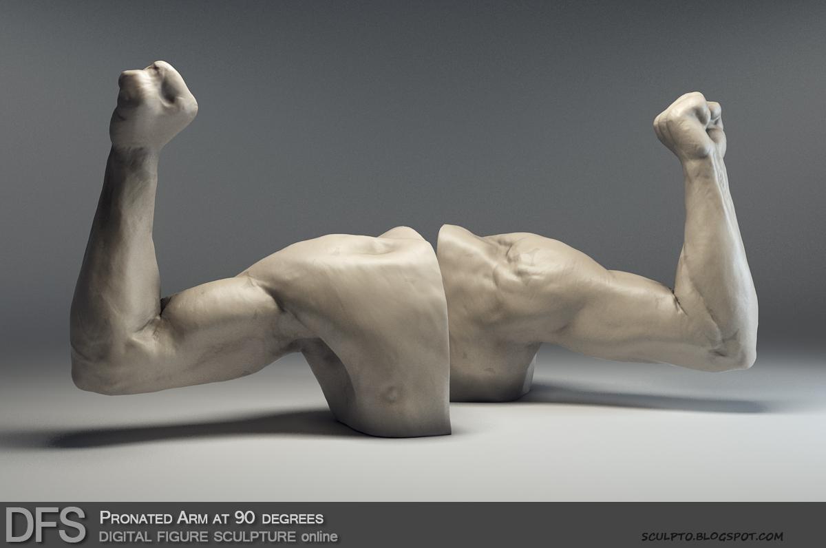 Tihomir Dimitrov: Digital Figure Sculpture online Workshop Anatomy ...