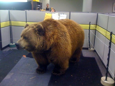 bear in office cubicle