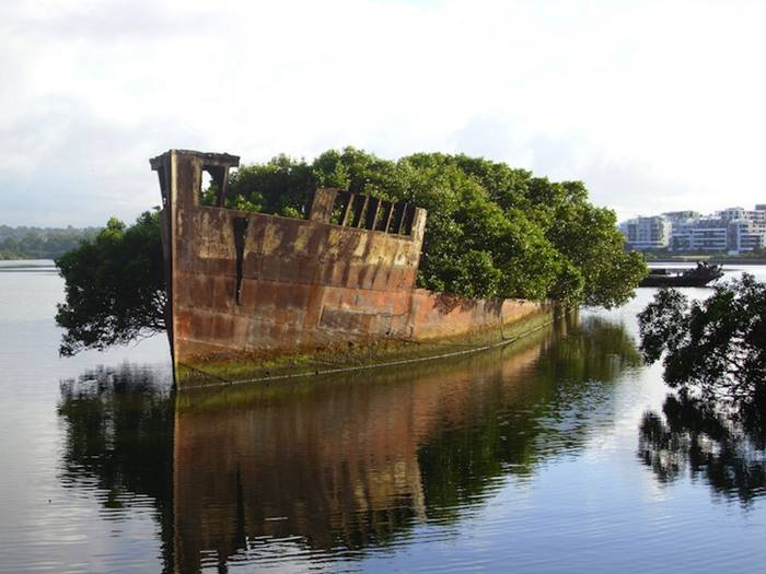 The SS Ayrfield is one of many decommissioned ships in the Homebush Bay, just west of Sydney, but what separates it from the other stranded vessels is the incredible foliage that adorns the rusted hull. The beautiful spectacle, also referred to as The Floating Forest, adds a bit of life to the area, which happens to be a sort of ship graveyard.