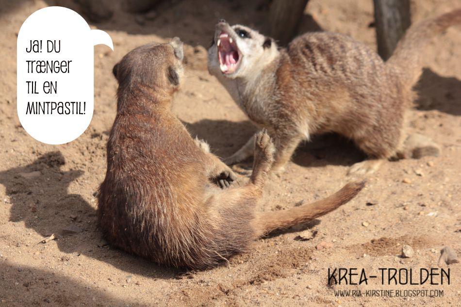 ecortguide Jylland Park Zoo rabat