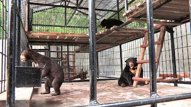 Desi, Hilda et Kevin dans leur nouvelle cage