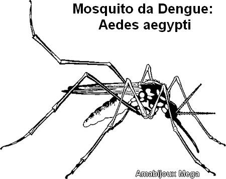 imagens para colorir mosquito da dengue - Imagens para colorir