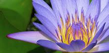 LotusGeburt