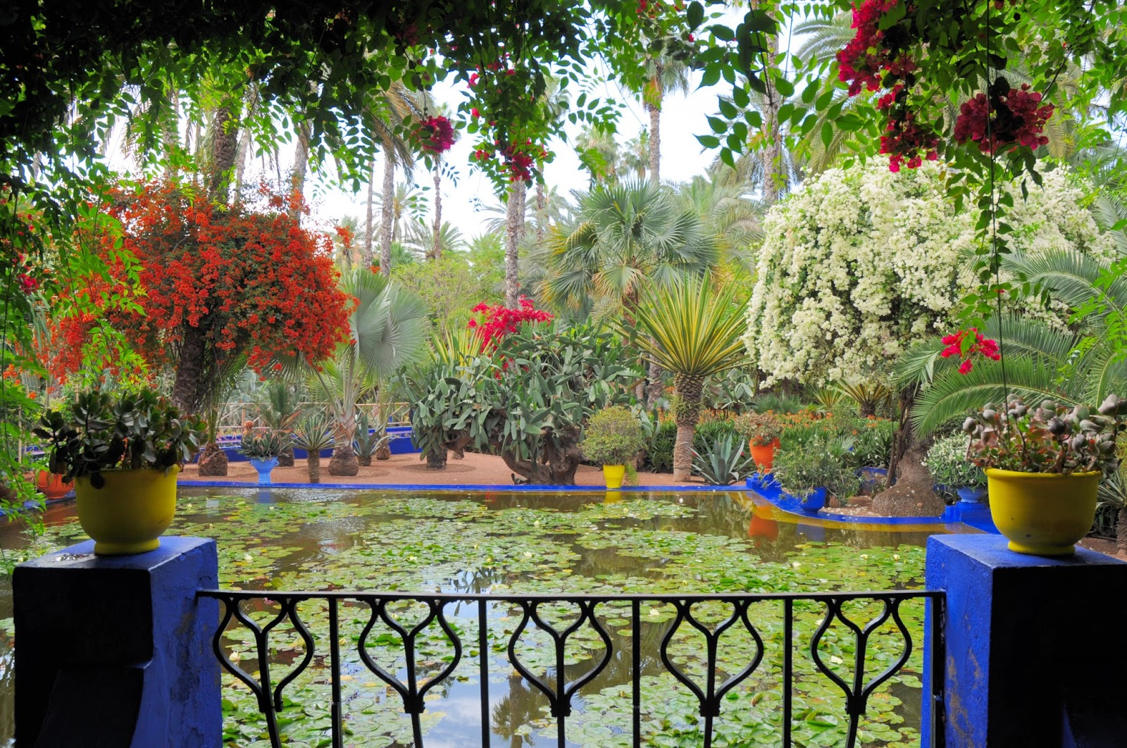 Majorelle garden morocco photo of the day for Jardin yves saint laurent maroc