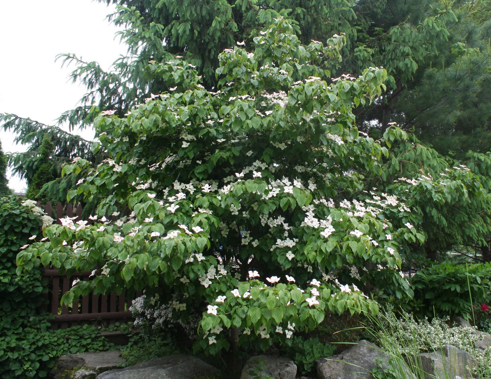 Our Garden Journal: Who Put the Dog in Dogwood