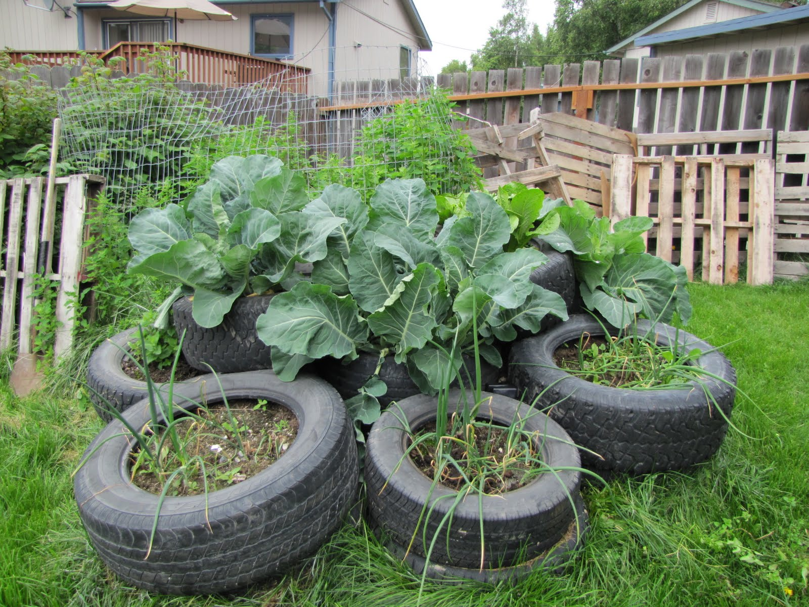 recycled car truck tire gardens veggieboards