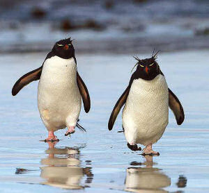 photos of penguin