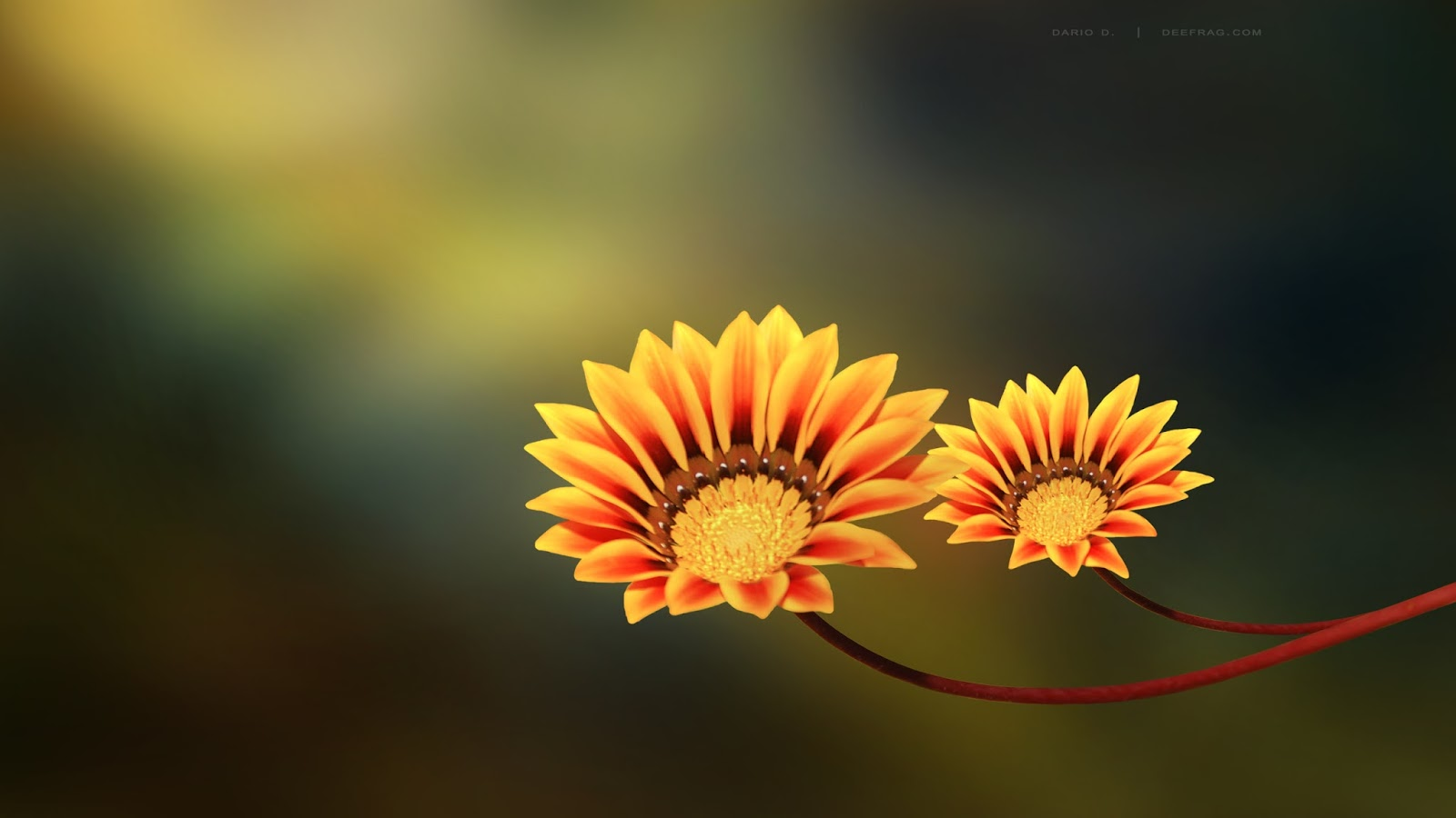 flowers for flower lovers.: beautiful flowers desktop wallpapers.