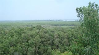 forêt de cajeputiers de Gáo Giông