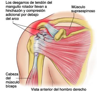 Los dolores el pecho la espalda y el vientre