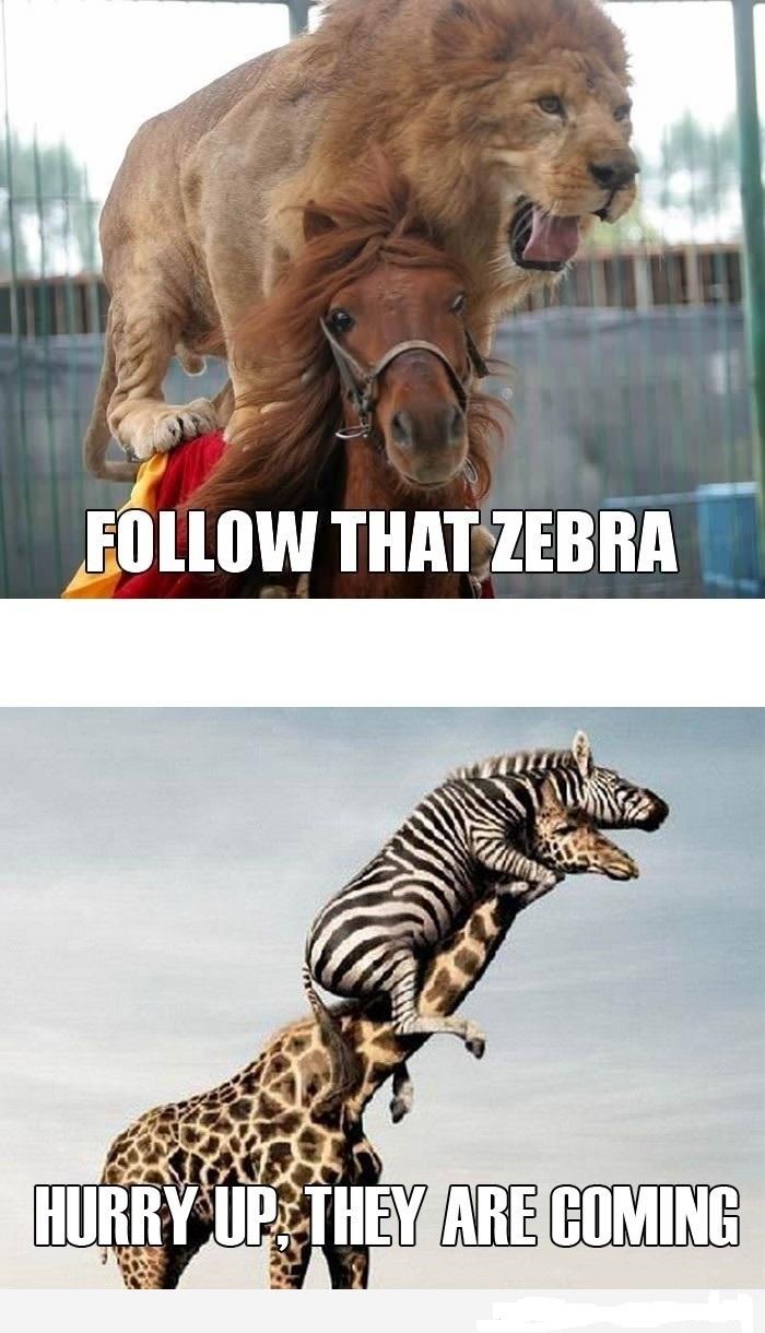 gambar kuda