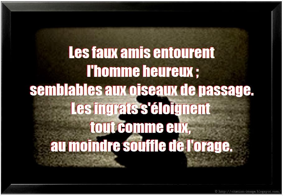 Citation faux amis en image