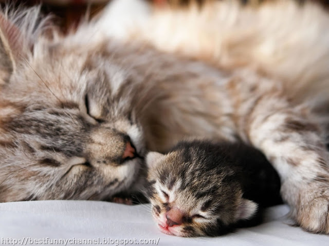 Cat and kitten sleeping.