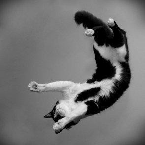 7 mitos sobre los gatos