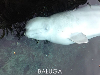 http://balugaband.blogspot.com/