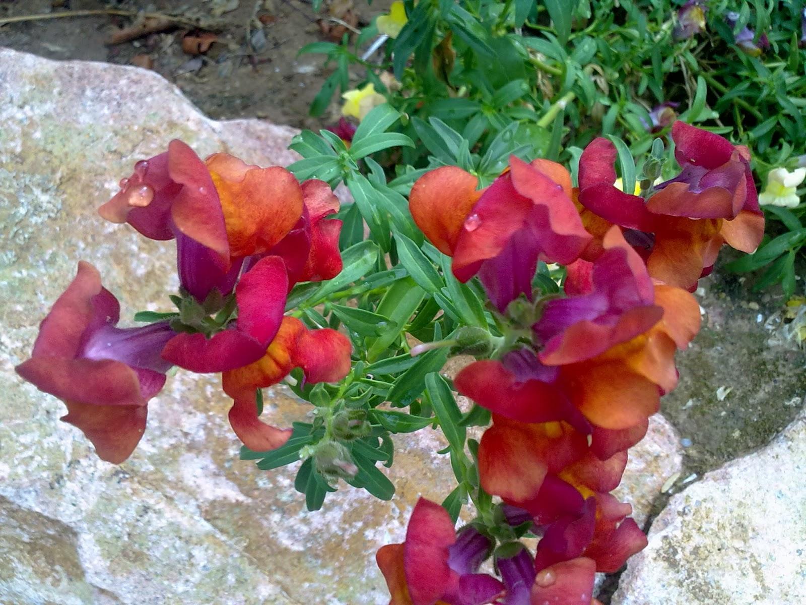 Jardines angelo flores para primavera y verano for Ver plantas para jardin