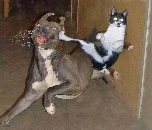 KUNG FU CAT PICTURE