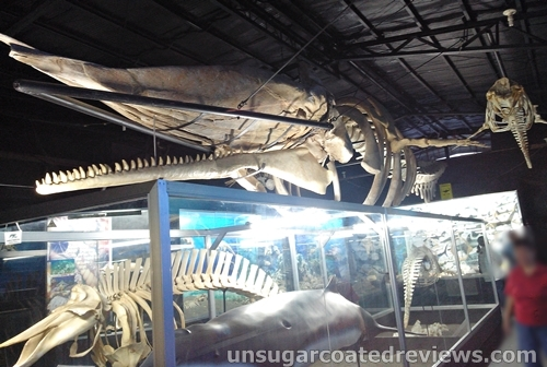 huge whale skeleton