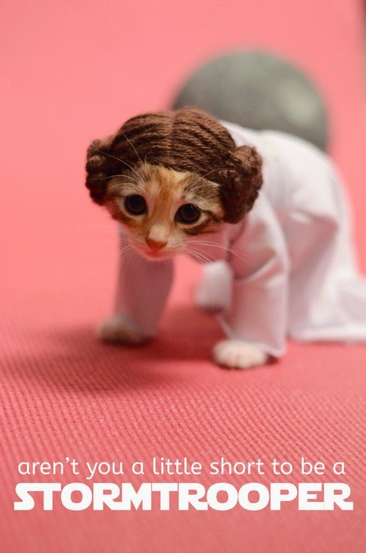 adorable kitten in princess leia costume