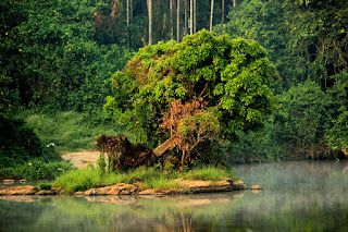 Kerala Forest pic