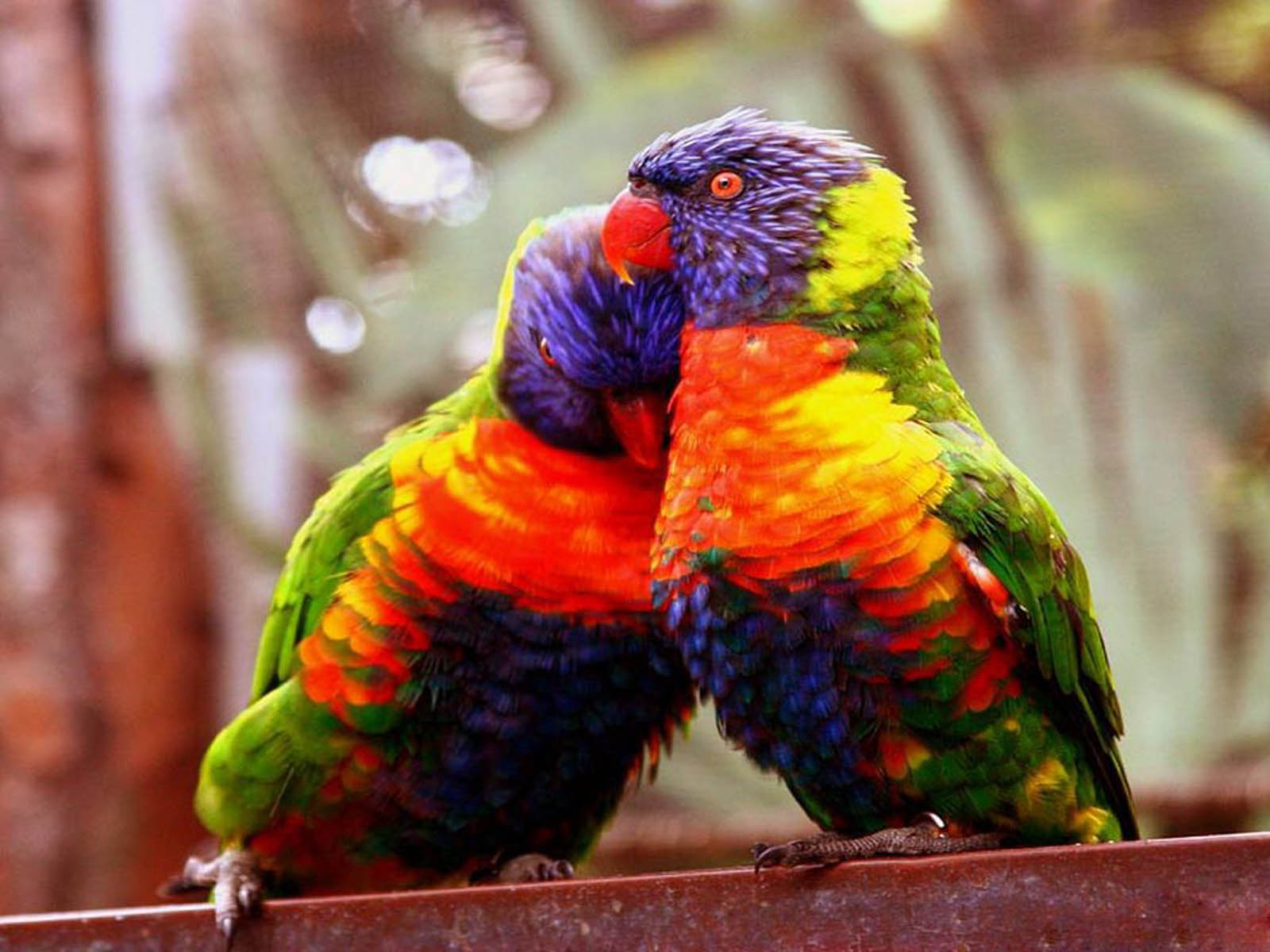 Incredible Images: Love Birds (High resolution) - photo#41
