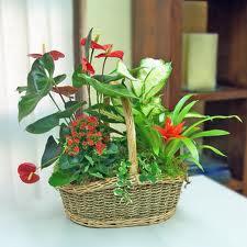 Decoracion con vidrio los adornos y el feng shui for Plantas para tener en casa segun el feng shui