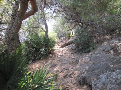 Pinedes litorals camí de la cova Tallada