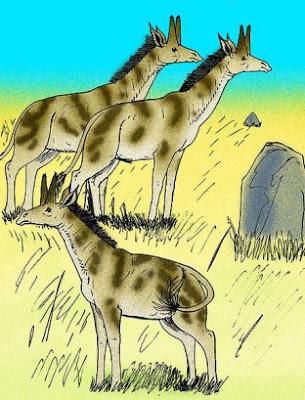 giraffidae fosil Honanotherium