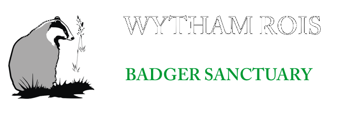 "WYTHAM ROIS , ""BADGER SANCTUARY"""