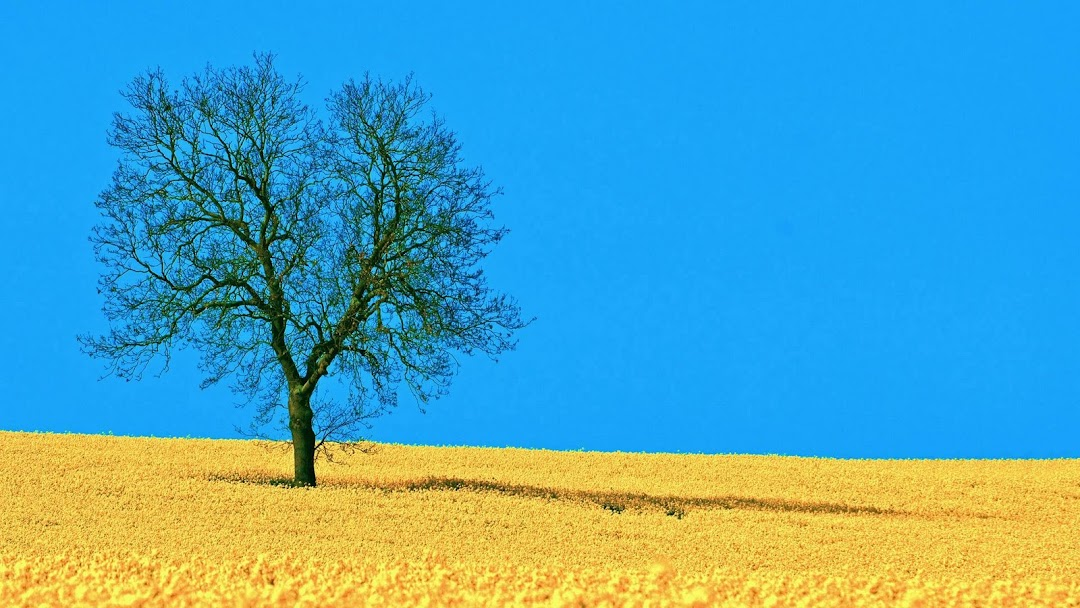 Field Tree hd wallpaper