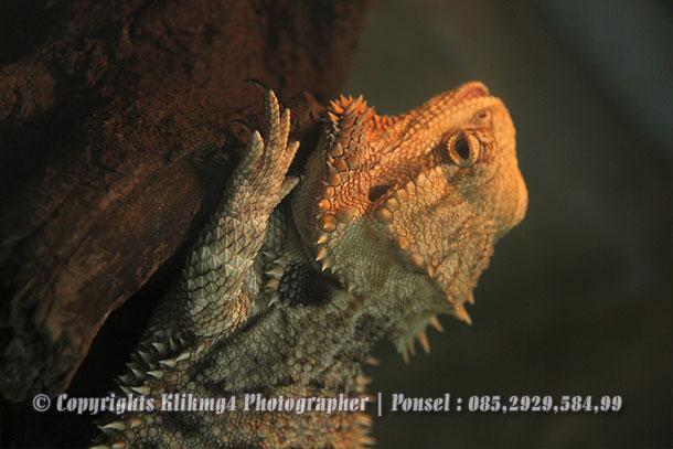 Aneka Satwa Digembira Loka Jogja Jawa tengah Klikmg 4 Fotografi