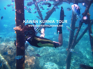 wisata tahun baru Karimunjawa
