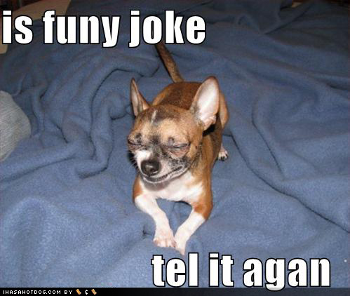 Funny wallpapers|HD wallpapers: dog funny pictures