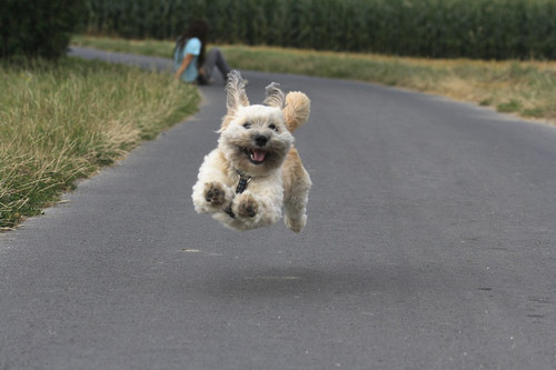 Funny Cute Happy Puppi...