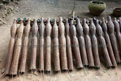 Jual Telik (Bubu) Benih Belut, Harga Rp.10.000,- /buah