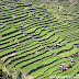 Rice Terrace of the Philippines Cordilleras