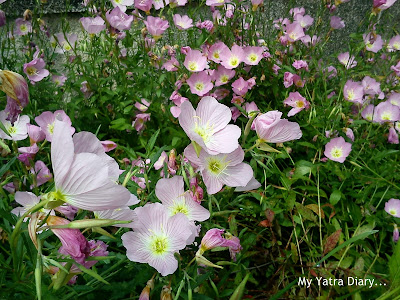 Pink flowers in Hibiya Garden - Tokyo, Japan