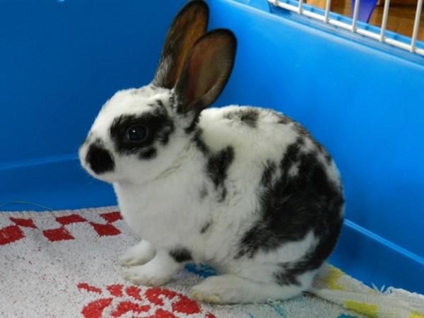 Ana en madrid los primeros d as en casa de un conejo enano - Casas para conejos enanos ...