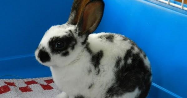 Ana en madrid los primeros d as en casa de un conejo enano - Casa conejo ...