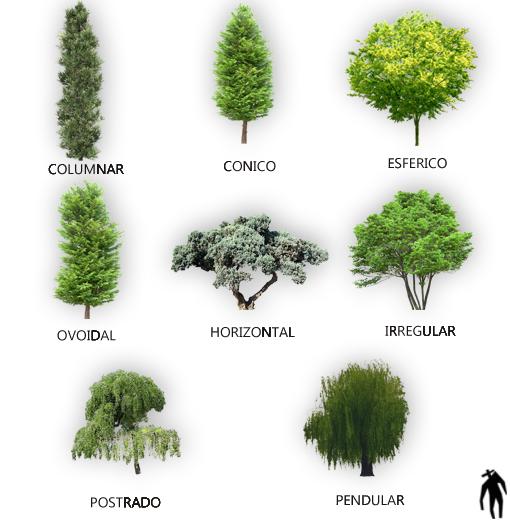 Tipos de plantas maderables v rias id ias - Clases de flores y sus nombres ...