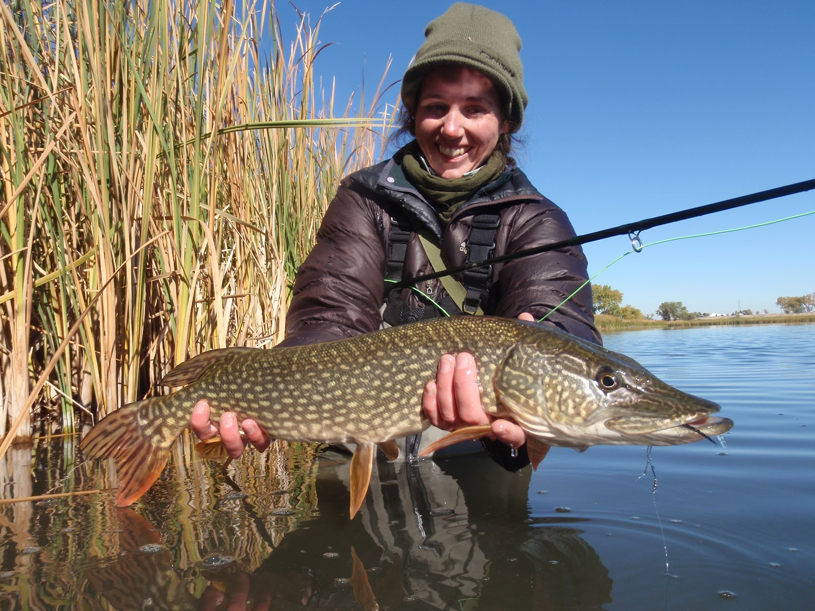 Colorado fly fishing reports northern pike on a cold for Pike fishing colorado