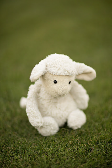 Lamb stuffed animal getting portrait taken