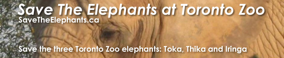 Save The Elephants at Toronto Zoo