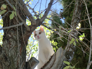 Meine katze...