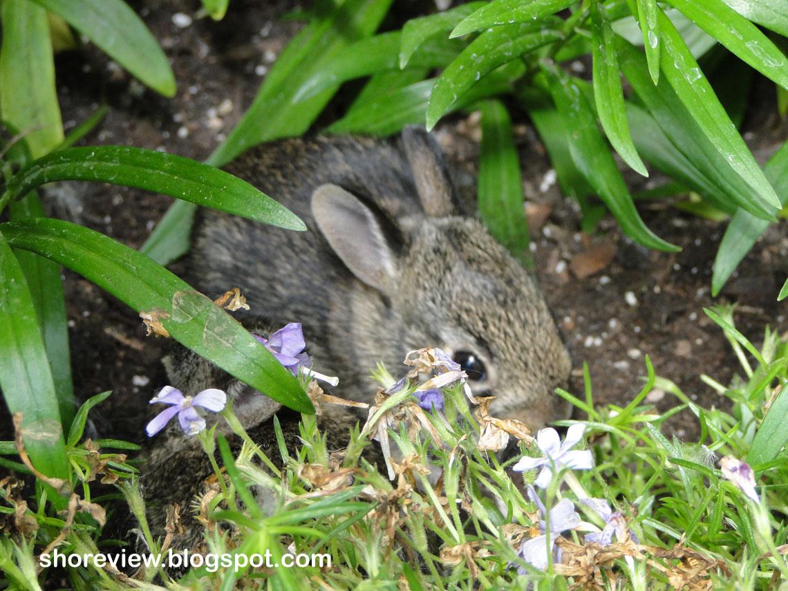 Rabbits And Raindrops Jim Arnosky 9780613360043 Amazon