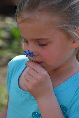 My little garden girl doing her best to make her nose blue with the pollen :)