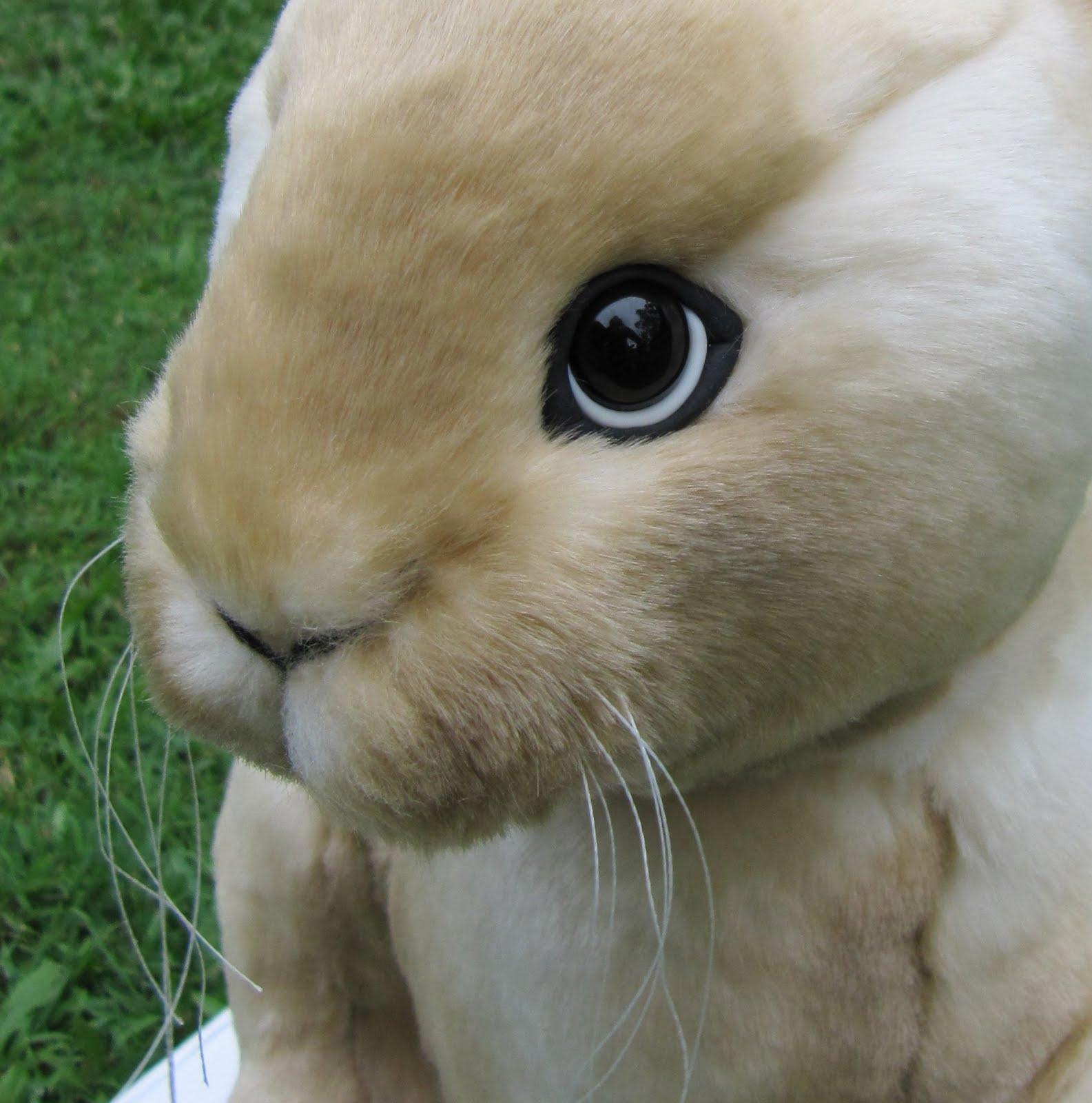the inner world of emma s bears latest design realistic bunny shape