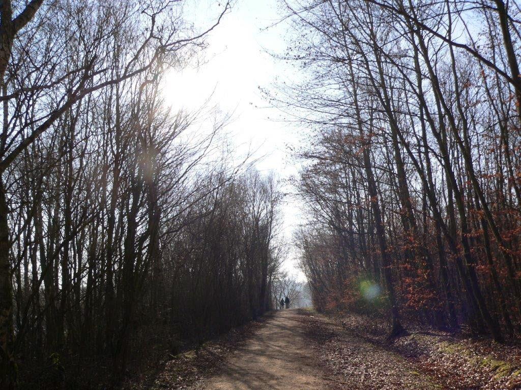 Naturpark Rheinland Hunderunde Köln Sonne Winter Spazierengehen Wandern See Bäume