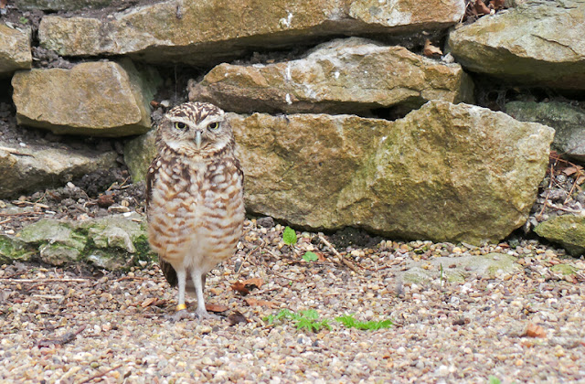 Dudley Zoo and Castle Owl