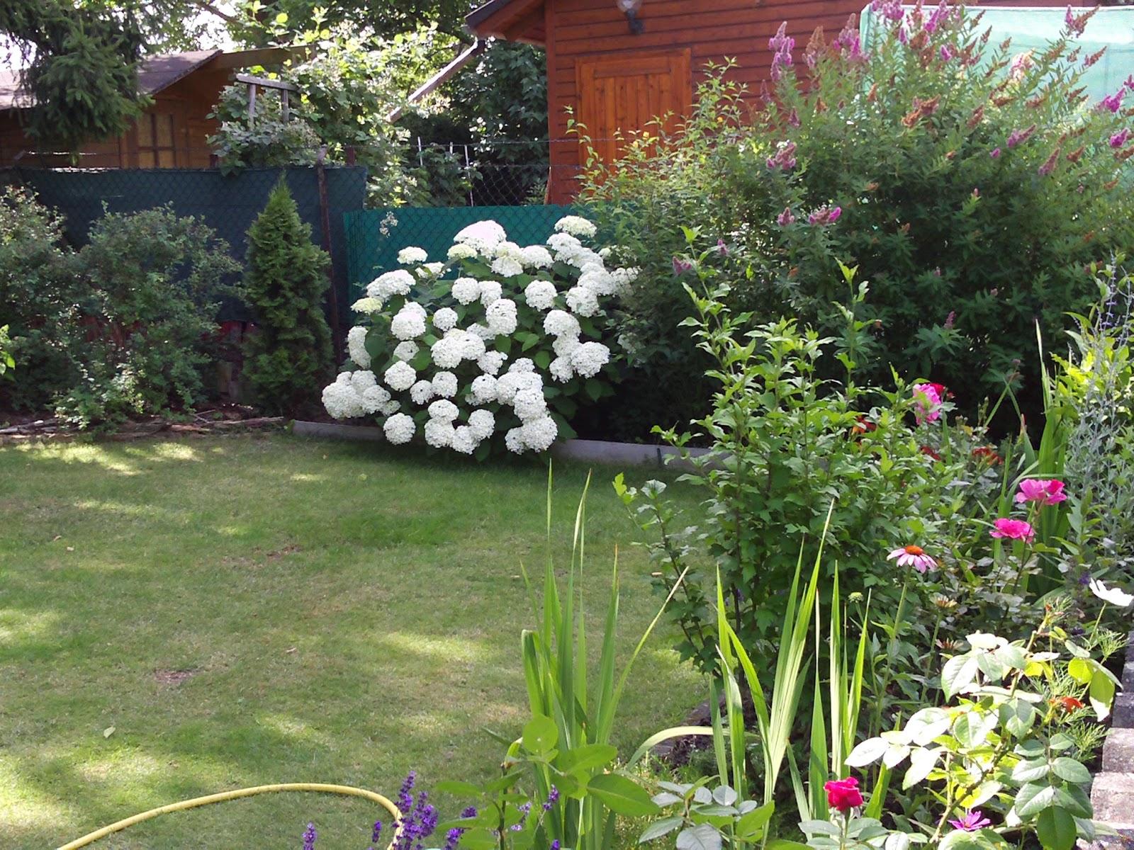 hortensie annabelle ballhortensie hydrangea. Black Bedroom Furniture Sets. Home Design Ideas
